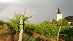 Prinz_Satzen_Regenbogen